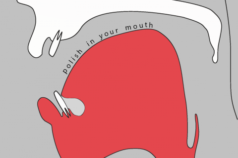 Graphics promoting the course. The text reads: Polish in your mouth. In the background there is a diagram of the speach organs.