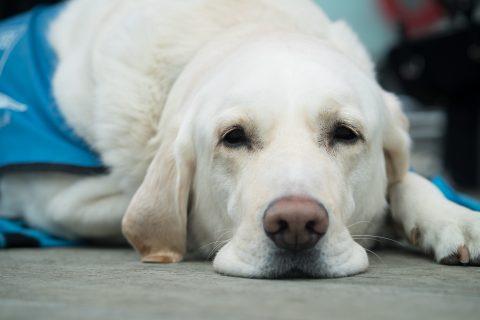 pysk psa z bliska