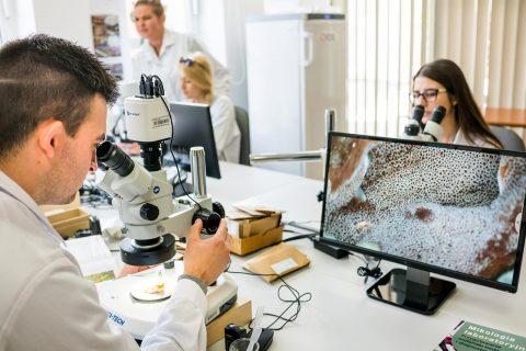 grupa studentów ubranych w białe fartuch podczas zajęć laboratoryjnych, na pierwszym planie mikroskop elektroniczny i monitor pokazujący obraz w dużym powiększeniu